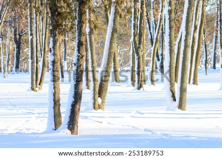 Snowy park at sunny winter day. Evergreen trees in sunlight beams - stock photo