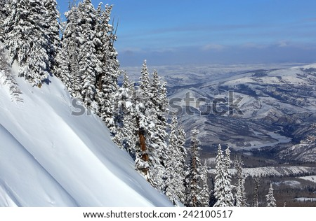 Snowy pines on a steep mountain slope, Utah, USA. - stock photo