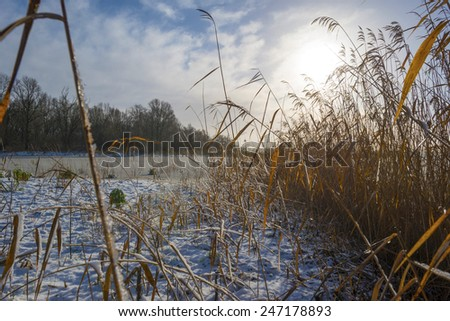 Snowy shore of a frozen lake in winter - stock photo