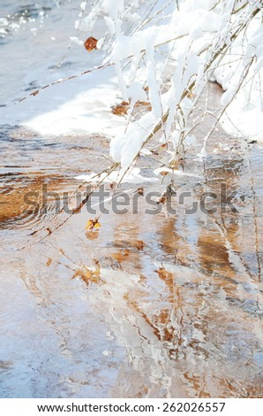 Snowy tree branches at winter - stock photo