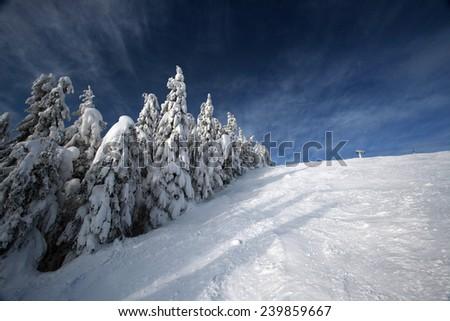 Snowy trees  - stock photo