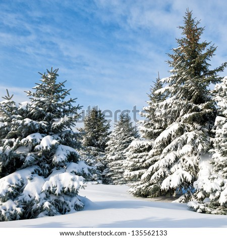 Snowy trees at day - stock photo
