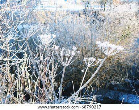 Snowy trees in York, England. - stock photo