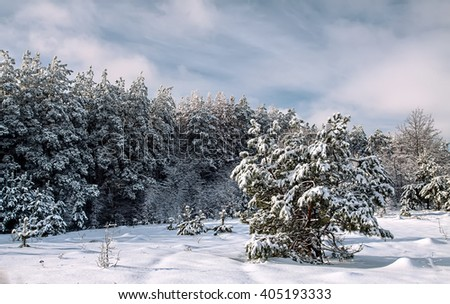 snowy winter forest, field trees before the storm - stock photo