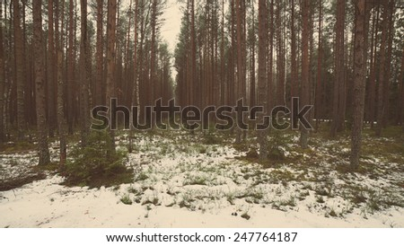 snowy winter forest landscape with snow covered trees in country - aged photo effect, vintage retro - stock photo