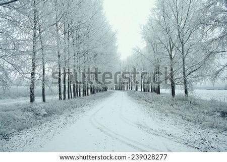 Snowy winter road in a field - stock photo