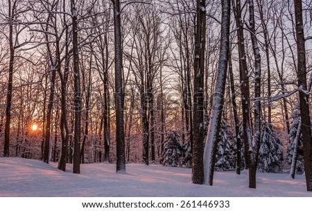 Snowy Winter Sunrise in New Jersey - stock photo