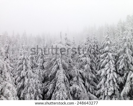 Snowy winter woods in Germany. - stock photo