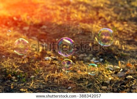 soap bubble in the sun. Beautiful summer bokeh - stock photo