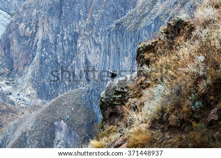 soaring condors in the Andes Mountains - stock photo
