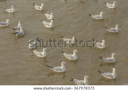 Soaring seagull flock at a shore in a cloudy day - stock photo