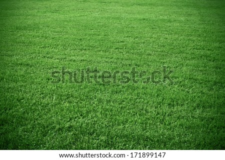 Soccer grass field background - stock photo
