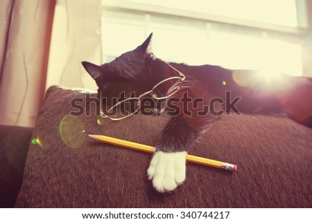 Social media black and white cat wearing glasses and holding a pencil, sleeping in the sun on top of a couch in the late afternoon sunlight.  Instagram toned effect. - stock photo