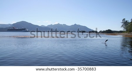 Sockeye salmon jumping near Sitka Alaska's Indian River with a cruise ship in the background - stock photo