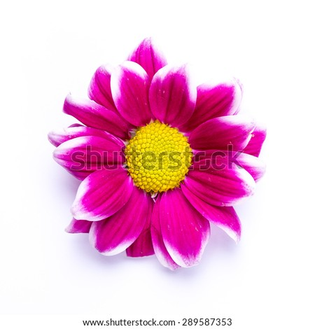 Soft abstract image of vivid flower. Macro with shallow dof. - stock photo