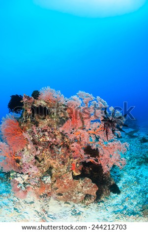 Soft and hard corals on a tropical reef - stock photo