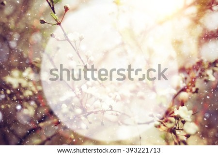 soft background blur circle for text Spring cherry blossom - stock photo