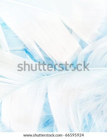 Soft blue feathers, macro background - stock photo