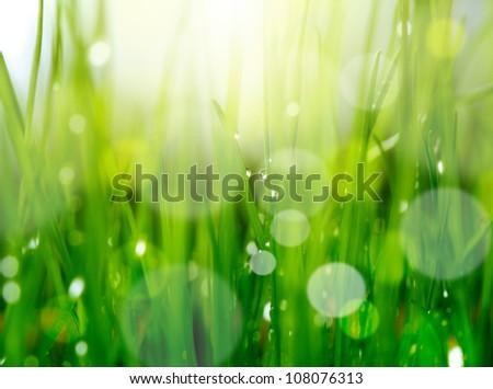 soft blur green grass background - stock photo