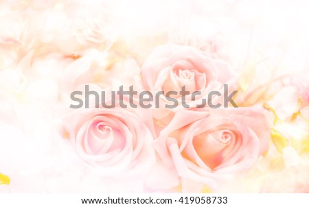 Soft blurred of rose flowers with soft bokeh in pastel color style for background. - stock photo