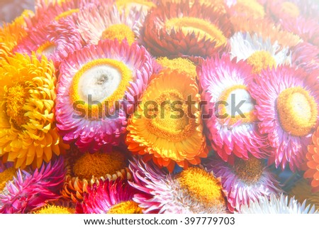 Soft blurred of vintage flowers background. - stock photo