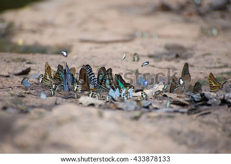 soft blurred  the colorful butterfly. - stock photo