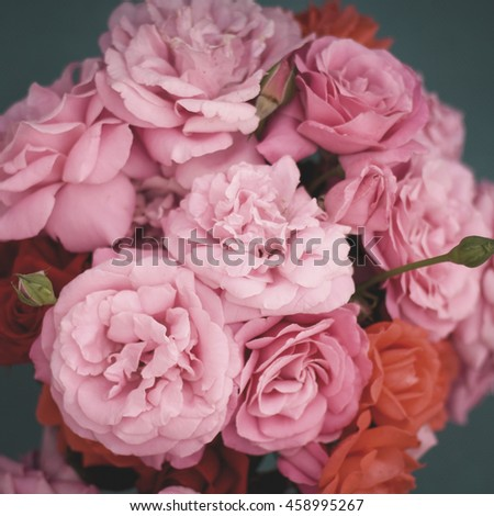 Soft color roses background. - stock photo