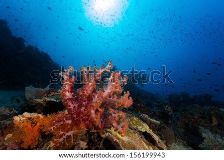 Soft coral and fish in moyo island in indonesia - stock photo