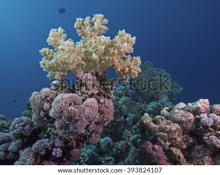 Soft coral on the top - stock photo