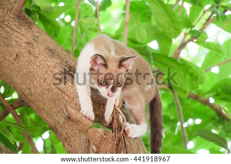 soft focus a little cat clamber on the tree - stock photo