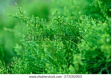 Soft focus close up of spring green grass - stock photo