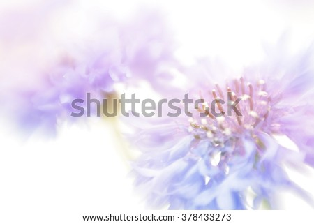 Soft focus cornflower background with copy space. Made with lens-baby and macro-lens. - stock photo