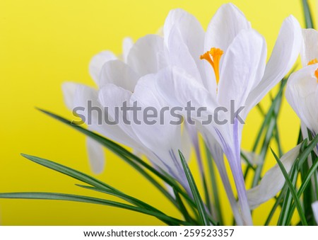 Soft focus macro of wildflowers - stock photo
