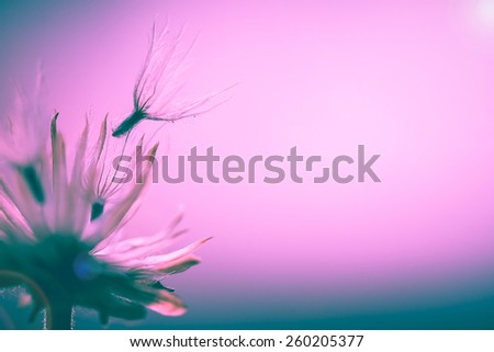 soft focus macro shot of fluffy grass flower seeds with filter colored. - stock photo