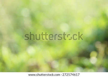 Soft focus natural green background. - stock photo