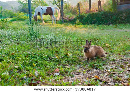 Soft focus of adorable rabbit eating grass in front of a horse behind in the morning - stock photo