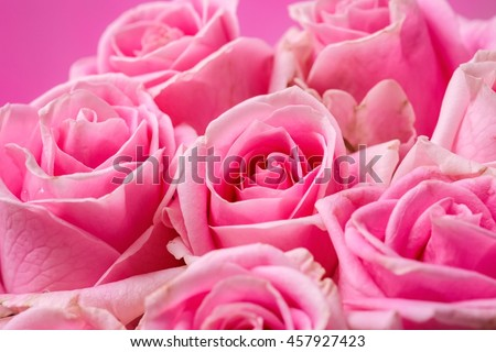 Soft focus of beautiful pink roses background - stock photo