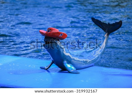 soft focus of Dolphin showing - stock photo
