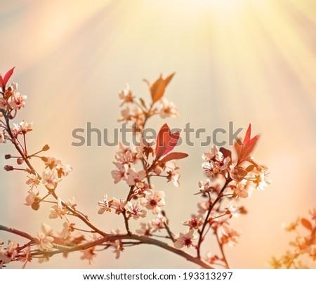 Soft focus on flowering branch - flowering tree - stock photo