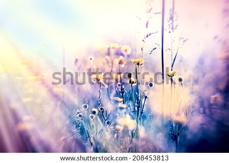 Soft focus on yellow meadow flowers and grass, unfocused - stock photo