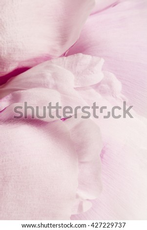 Soft Focus Pink Peony Petals Detail Background - stock photo
