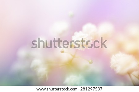 Soft focus white flower blur background. Made with lens-baby and macro-lens. - stock photo