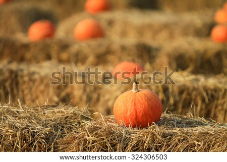 Soft focus with some pumpkin with hay for Fall decoration at market place - stock photo