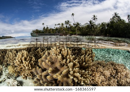 Soft leather corals compete for space to grow, for sunlight, and for planktonic food on a shallow coral reef in the Solomon Islands. This area is known for its high marine biological diversity. - stock photo