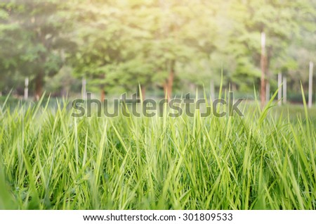 Soft Light Blurred Background Texture of Fresh Green Grass Field - stock photo
