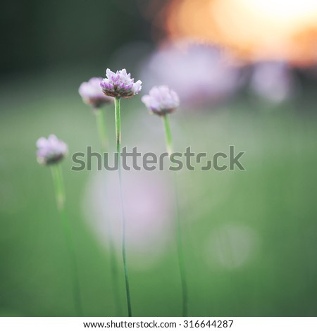 soft pink meadow flowers on green natural field background - stock photo
