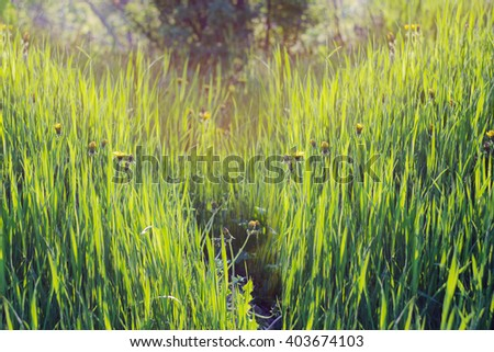 Soft young grass on a hill in the morning sunlight. Eco background - stock photo