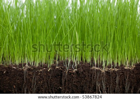 Soil and Grass - stock photo