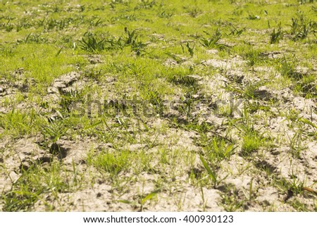 soil and grass during drought - stock photo
