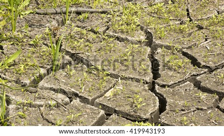 soil and grass during drought cracks in the land of drought - stock photo
